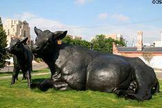 """Scottish Angus Cow and Calf""  Artist: Dan Ostermiller  Location: Outside Denver Art Museum  Photo by: Jim Steinhart"