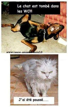 Dog Memes To Prove Whos The Boss - Funny Animal Quotes - - 30 Funny Cat Vs. Dog Memes To Prove Whos The Boss Lovely Animals World The post 30 Cat Vs. Dog Memes To Prove Whos The Boss appeared first on Gag Dad. Funny Animal Jokes, Funny Dog Memes, Cute Funny Animals, Funny Animal Pictures, Cute Baby Animals, Cat Memes, Funny Dogs, Cute Cats, Memes Humor
