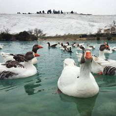 Our cute little friends are really making sure that they enjoy Pamukkale!