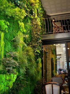Mur vegetal interieur