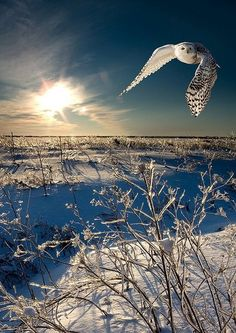 Winter Sunrise        #famfinder