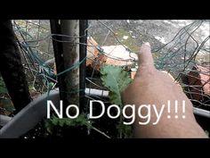 No doggy!!!