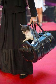 Pet fashion show for charity. Photos by: Aivar Pärtel  #MERIKHbags #Petcarrier
