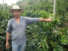 OIT destaca avances del sector cafetero de Colombia