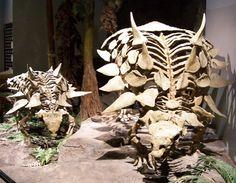 Fossil Porn