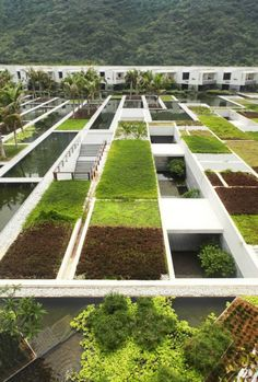 Great patterns on green roof