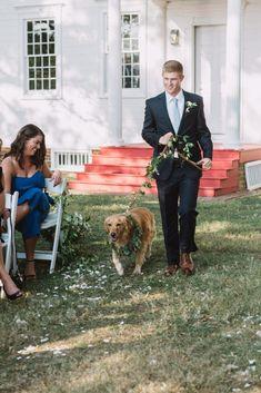 Golden Retriever greenery leash, dog wedding, greenery collar, dog aisle, outdoor wedding, manor house wedding, september wedding