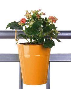 Plantas de exposición