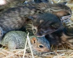 Momma kitty helps baby squirrell!