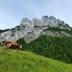 Salzburger Nockerln ... oder doch Berchtesgadener?