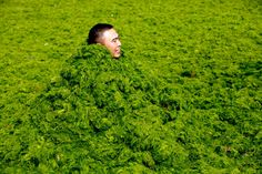 Reuters The Chinese Yellow River was invaded by Algae.