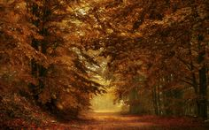 Download wallpapers autumn forest, park, yellow leaves, autumn, path in the forest
