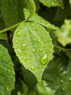 비가 내린 뒤에 더욱 싱싱한 나뭇잎
