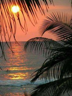 Palm Tree Art, Palm Tree Sunset, Sunset Beach, Hawaiian Sunset, Beach Sunsets, Palm Trees Beach, Malibu Sunset, Sunset Art, Beach Sunset Pictures