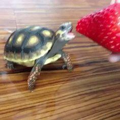 Dieser kleine Kerl, der seine Erdbeere sooooo genießt.   21 Tierbabys, die so winzig sind, dass Du weinen willst
