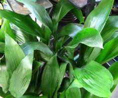 piante che hanno bisogno di poca luce