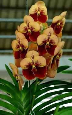 ORCHIDS: Vanda … #orchidspotted