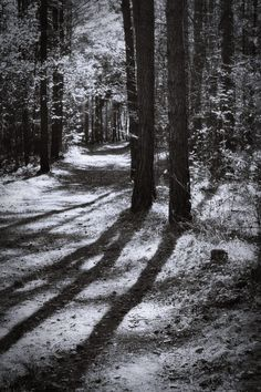 bwstock.photography  //  #forest #shadows Black White Photos, Black And White Photography, Forest Photography, Free Black, Style Guides, Shadows, Country Roads, Nature, Outdoor