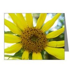 OLD FLORIDA SUNFLOWER Note Cards