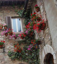 Assisi - Italy http://unpiccologiardino.blogspot.it/