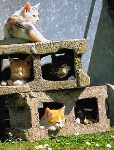 Variety of felines,laying in cement blocks,for the warmth.