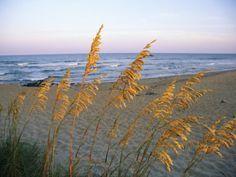 Beach Scene with Sea Oats Photographic Print
