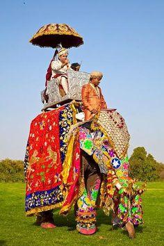 FESTIVAL DE JAIPUR - INDIA  los elefantes se mueven mucho! Me subí en uno para una excursión a una fortaleza en India.