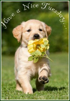 Image result for dog hello tuesday pictures