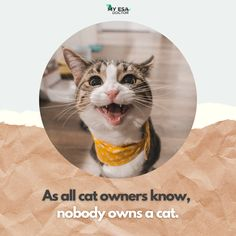 Your cat owns you, as they say, dogs have owners, cats have the staff to their service. #cats_of_day #cat_features #catsrequest #my_loving_pet #meowvswoof #catstocker #feature_do2 #pets_of_our_world #elegant_cats #animal_captures #magnificent_meowdels #a_world_of_cats #catworldwide #poshpamperedpets #best_cats #furrendsupclose #thecatawards #igclubcats #igcatjunky #caturday365 #ic_animals #fluffycatcrew #7catdays #petoftoday #animalpolis #catsygram #world_bestanimal #mygreatcat