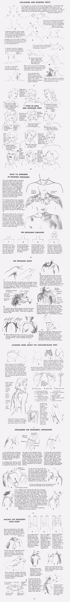 Drawing Shoulders And neck | http://www.ljplus.ru/img4/p/i/pinwizz/neck_shoulders_drawing.gif