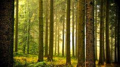 http://www.celitel-anastasiya.ru -- Жизнь учит лишь тех, кто ее изучает.   http://www.celitel-anastasiya.ru -- Становиться с годами моложе - вот истинное искусство жизни.   http://www.celitel-anastasiya.ru -- Прежде чем оценить кого то взгляни на свой ценник!