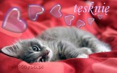 little grey kitten Cats Wallpaper, Wallpaper Pictures, Little Kittens, Cats And Kittens, I Love Cats, Cool Cats, Grey Kitten, Cat Quotes, All About Cats