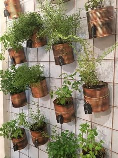 The Effective Pictures We Offer You About Balcony Garden wall A quality picture can tell you many things. You can find the most beautiful pictures that can be presented to you about Balcony Garden apa