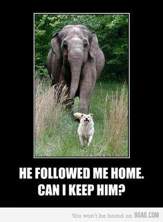 True story...elephant is the dogs best friend! Lovely story :)