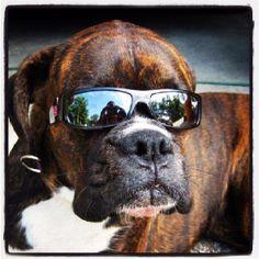 Cool Boxer ☺