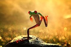 A frog standing on one leg.