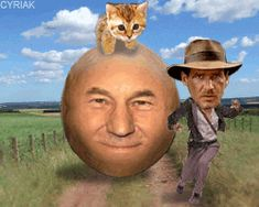 Discover & share this Indiana Jones GIF with everyone you know. GIPHY is how you search, share, discover, and create GIFs. Indiana Jones, Epic Gif, Lets Get Weird, Patrick Stewart, Weird Gif, Find Gifs, Nicolas Cage, Why Do People, Most Popular Memes