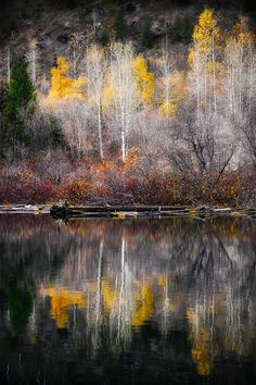 ***Late Autumn Reflection (no location given) by Ursula Abresch / 500px