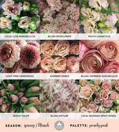 Mayesh Cooler Picks - Spring -  Peachy Pink // Products: |1| Local Luxe ranunculus, blush riceflower, peach lisianthus |2| Light pink gerrondos, shimmer roses, blush Japanese ranunculus |3| Peach tulips, blush astilbe, local Natasha spray roses