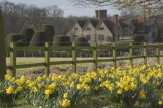 When to divide daffodils, how to divide daffodils, flower division, how to move daffodil bulbs
