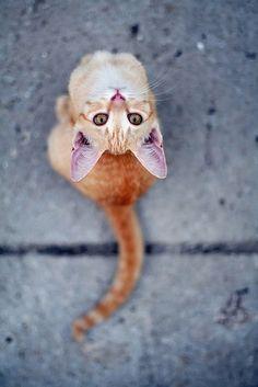orange upside down cat...