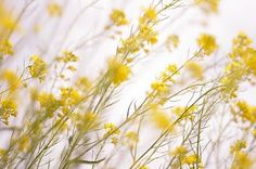 *Lovely Clusters - The Pretty Blog: Friday Moodboard - Romantic Yellow