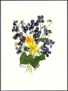 Purple and white Violets and mini daffodils make the BEST notecards to send !! Giclee print on recycled paper++ Free Shipping in US