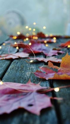 Pin by e brosky on wallpapers fall wallpaper, autumn photography, fall deco Autumn Aesthetic, Christmas Aesthetic, Autumn Photography, Fairy Light Photography, Photography Ideas, Landscape Photography, Sparkler Photography, Umbrella Photography, Photography Books