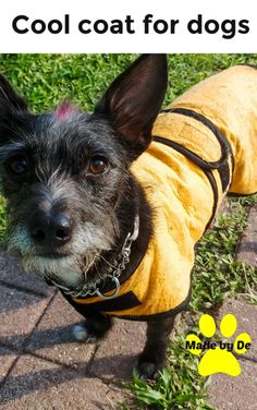 How do you know if the dog cool coat you choose is going to be the right one? Small Dog Coats, Small Dogs, Cool Coats, Dog Safety, Dog Activities, Little Dogs, Dog Care, Best Dogs, More Fun