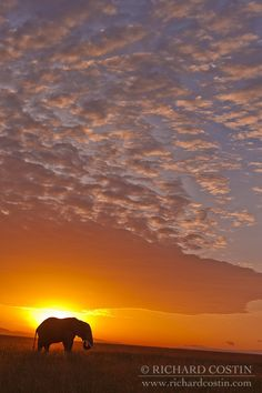 Elephant Sunrise by Richard Costin - Photo 2425594 - 500px
