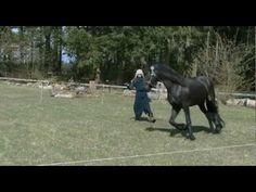 Terra Natura, Equilibretraining met paarden - YouTube