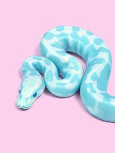 Blue Snake Art Print by Paul Fuentes - X-Small Les Reptiles, Cute Reptiles, Reptiles And Amphibians, Mammals, Pretty Snakes, Beautiful Snakes, Animals Beautiful, Animals And Pets, Baby Animals