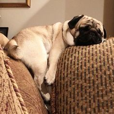 Do you have a Pug? What is your Pugs name? Here are 30 pugs with great names! Sweet Dogs, Best Dog Names, Pug Pictures, Pug Photos, Baby Pugs, Cute Dogs And Puppies, Black Pug Puppies, Bulldog Puppies, Doggies