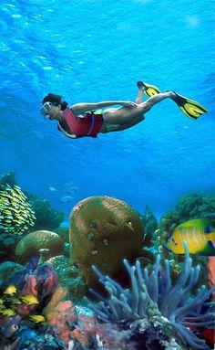 Los colores lo dicen todo. El placer de disfrutar de la vida submarina es una de las mejores opciones en la #RivieraMaya.